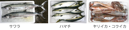 Fish2_2