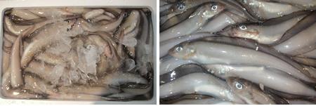 水魚(みずべこ)