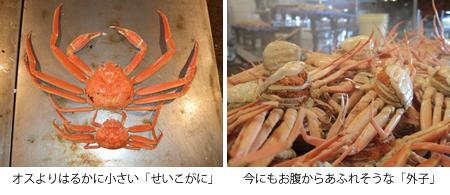 (左)オスよりはるかに小さい「せいこがに」、(右)今にもお腹からあふれそうな「外子」